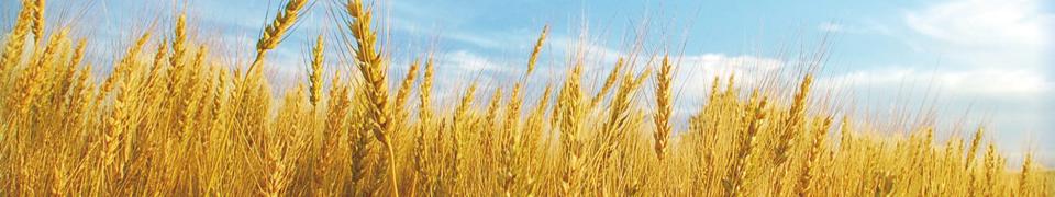 日本穀物科学研究会